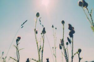 伸びゆく草花