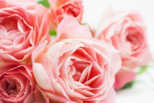 バラの香りの効果