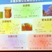 香り成分の研究スライド
